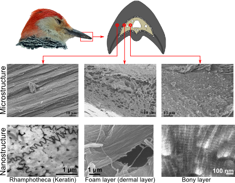 File:Woodpecker structure ICME.png
