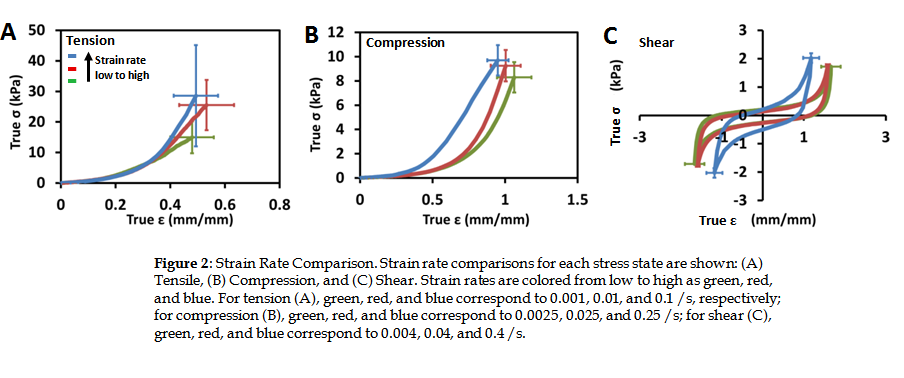 Strain Rate Dependence The Strain Rate Domains